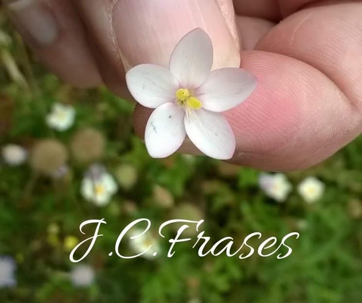 J.C.Frases